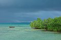 Seascape With Mangrove Trees Royalty Free Stock Images - 56821359