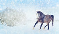 Gray Horse With Winter Fur Running Trot On Snow Nature Background. Banner Stock Image - 56838321