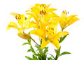 Bouquet Of Yellow Lilies Royalty Free Stock Images - 56875869