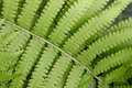 Beautyful Leaf Of Fern Is Close-up Background Stock Photo - 56879260