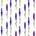 Lavender Seamless Pattern In Watercolor. Pattern For Fabric, Paper And Other Printing And Web Projects. Watercolor Background Stock Images - 56885634