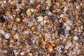 Wet Sea Sand Or Tiny Pebbles, Macro View Stock Images - 56889814