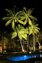 Resort Palm Trees At Night Stock Images - 5694334