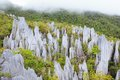 Limestone Pinnacles At Gunung Mulu National Park Stock Images - 56908384