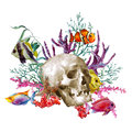 Watercolor Sea Life Greeting Card With Skull And Royalty Free Stock Photo - 56910595