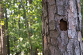 Woodpecker Hole In A Tree Stock Photography - 56917542