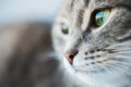 Portrait Of Green-eyed Cat Stock Photography - 56974132
