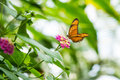 Butterfly On Flower Royalty Free Stock Photos - 56976308