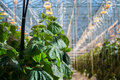 Greenhouse Royalty Free Stock Photo - 57001055