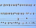 Pigeons Perched On Wires. Royalty Free Stock Photography - 57034217