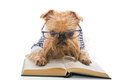 Serious Dog In Glasses Reading A Book Royalty Free Stock Image - 57039426