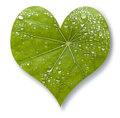 Leaf Heart Love Stock Images - 57056444