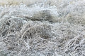 Frozen Grass Stock Images - 57076784
