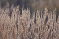 Dry Grass Royalty Free Stock Photography - 57076827