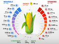Vitamins And Minerals Of Corn Cob Royalty Free Stock Photography - 57102717