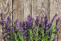 Wood Lavender Flowers Background Royalty Free Stock Photos - 57107568