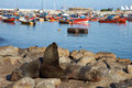 Sea Lions In Iquique Harbour Royalty Free Stock Photo - 57108725
