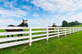 Horses At Horse Farm. Country Landscape. Stock Photo - 57144020