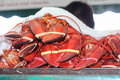 Fresh Lobsters For Sale At Outdoor Market Royalty Free Stock Photography - 57147527