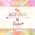 Autumn Sale - Fall Leaves. EPS 10 Royalty Free Stock Image - 57161766