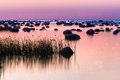 Stones In The Sea At Sunset Purple Royalty Free Stock Image - 57178786