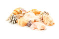 Sea Shells Royalty Free Stock Images - 57191769