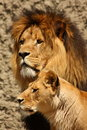 Lion And Lioness Royalty Free Stock Photos - 5726488