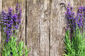 Wood Lavender Flowers Background Stock Photos - 57229443