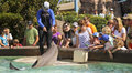 A Dolphin Entertains Visitors At Dolphin Point Stock Photos - 57282283