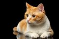 Lying Ginger Cat Surprised Looking At Left On Black Mirror Royalty Free Stock Photo - 57282935
