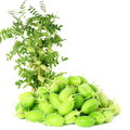 Green Young Chickpeas Pod With Plant  On Pure White Background Royalty Free Stock Photography - 57289097