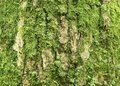 Old Oak Bark With Green Moss Stock Photos - 5737143