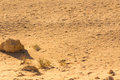 Desert Sand Pattern Texture Stock Photography - 57305792