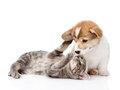 Cat Playing With A Dog. Isolated On White Background Royalty Free Stock Photo - 57339195