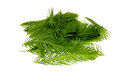 Spruce Tips Stock Photo - 57357210