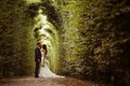 Groom And Bride In Schonbrunn Gardens Royalty Free Stock Photos - 57358678