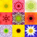 Collection Set Nine Flower Mandalas Various Colors Kaleidoscope Royalty Free Stock Image - 57365366