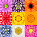 Collection Set Nine Flower Mandalas Various Colors Kaleidoscope Stock Photo - 57365940