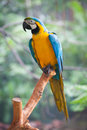 Macaw Stock Photos - 57382913