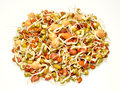 Sprouting Lentils Royalty Free Stock Photography - 57387087