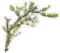 One Simple Fresh Branch Of Christmas Tree Royalty Free Stock Photo - 57439315