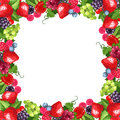 Frame With Various Berries. Vector Illustration. Royalty Free Stock Image - 57450366