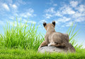 Baby Lion Sit On The Rock Royalty Free Stock Photo - 57468765