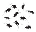 Set Of Black Silhouette Cockroach With Detail Royalty Free Stock Photos - 57490278