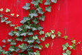 English Ivy Climbs Vibrant Red Wall Stock Photos - 5752783