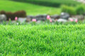 Real Grass With Blur Background Stock Photo - 57500860