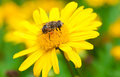 Bee In Flower Stock Image - 57511001