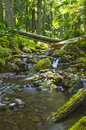 Waterfall In Forest Creek Olympic National Forest Washington State Stock Photo - 57531140