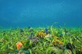 Ocean Floor With Sea Grass And Colorful Sponges Royalty Free Stock Photography - 57536017