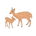 Female Deer With A Fawn Royalty Free Stock Image - 57537496